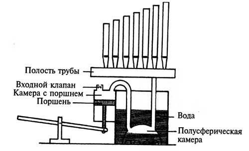 Строение гидравлиса